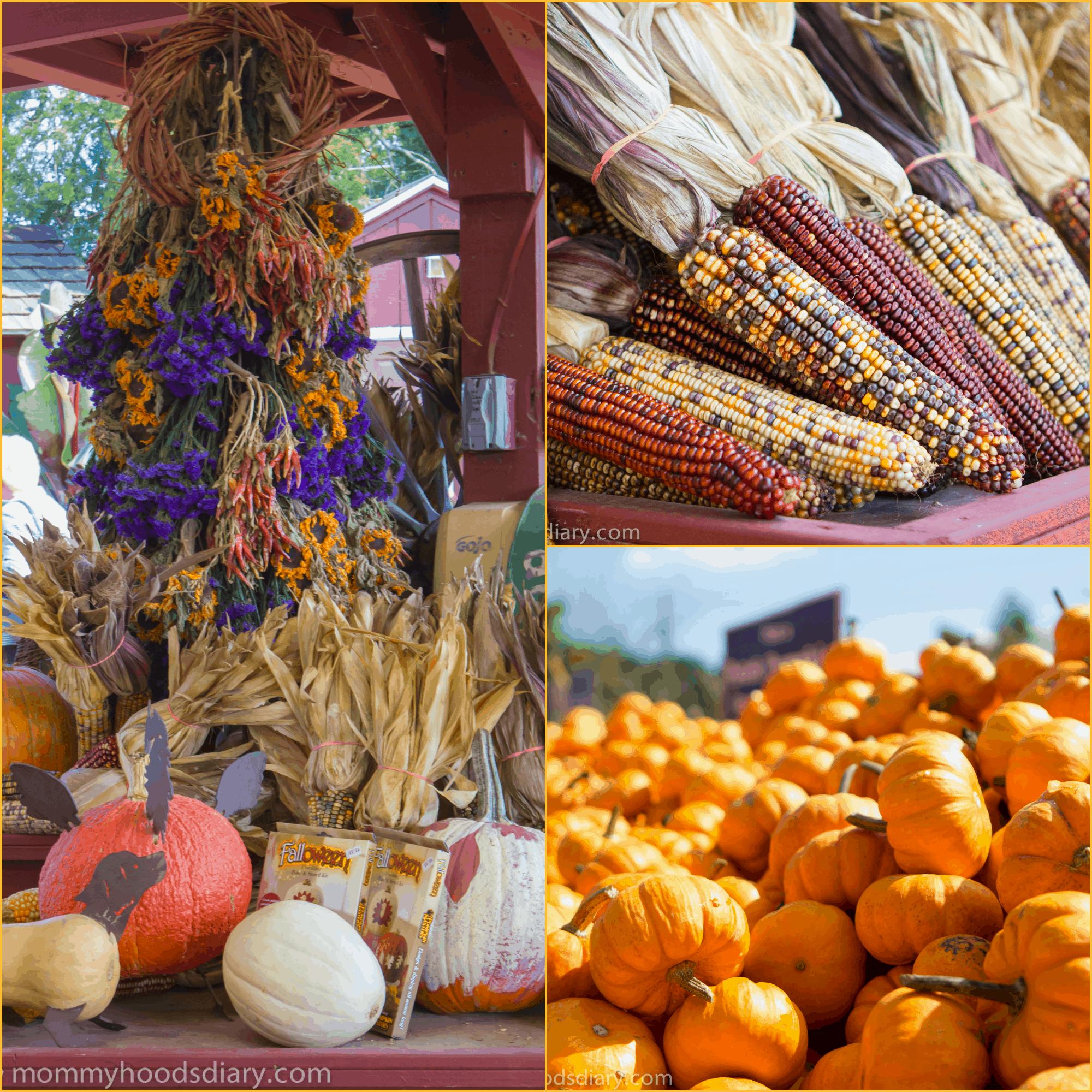 pumpkin Collage corn and pumpkin