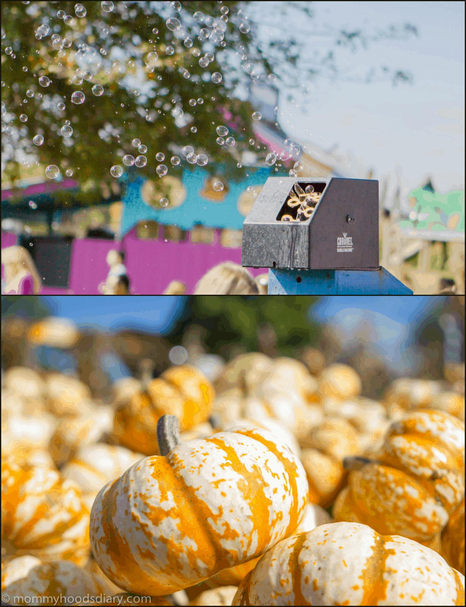 pumpkin Collage bubbles and pumpkins